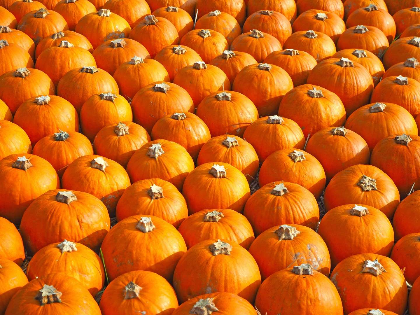 Healthy Halloween Tips from NTB Trucking